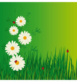 daisies and ladybugs in the grass vector illustrat vector image vector image