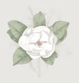 hand drawn magnolia branch vector image vector image