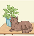 cute brown cat pet animal lying on a wooden table vector image