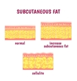 leather sectional layer of subcutaneous fat vector image