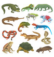 reptile nature lizard animal wildlife wild vector image