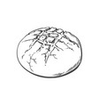 sketch round bread isolated vector image vector image