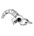 tattoo skull skull a sheep horns ink vector image vector image
