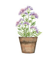 watercolor card with a valerian in a vector image