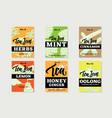 hand drawn healthy tea brochures vector image
