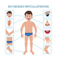 boy kid body parts vector image vector image