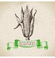 Hand drawn sketch corn vegetable Eco food vector image vector image