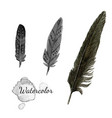 watercolor feathers black feather of crow hand vector image