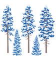 winter conifers set vector image vector image