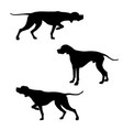english pointer silhouettes vector image
