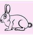 hare or rabbit vector image