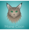 Maine coon vector image vector image