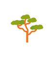 baobab tree botanical nature australia icon on vector image