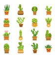 cute desert plants cactus in pots cartoon vector image vector image