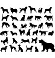 dogs silhouettes collection vector image vector image