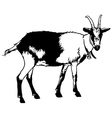 Goat from Side View vector image