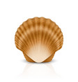 3d realistic brown closed scallop pearl vector image vector image