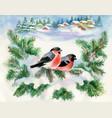 bullfinch birds on snowy tree branch watercolor vector image vector image