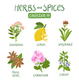 Herbs and spices collection 11 vector image vector image