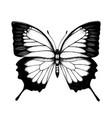 high detailed ulysses butterfly hand drawn inse vector image vector image
