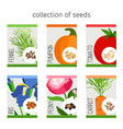 seeds collection of flowers and vegetables vector image vector image