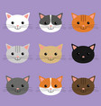 cute cats heads cartoon character vector image