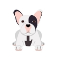 french bulldog icon vector image