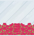 set of roses isolated icon vector image