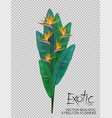 bird paradise flowers on transparent background vector image