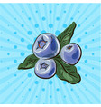 blueberries on a blue background lines points vector image