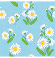 floral light blue pattern with chamomiles vector image vector image
