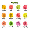 fruits and berries sketches collection hand drawn vector image