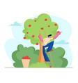man farmer pick apples to basket male gardener vector image vector image