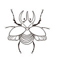 rhinoceros beetle isolate on a white background vector image