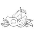 avocado fruit logo halves avocado leaves vector image vector image