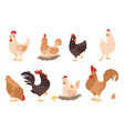 cartoon chicken funny rooster and hen farm vector image