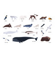 collection cute polar animals birds marine vector image