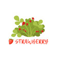 ripe strawberry berry bush with name vector image vector image