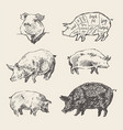 drawn pigs scheme pork cuts restaurant menu vector image