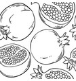pomegranate fruits pattern vector image