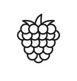raspberry outline icon fruit symbol healthy food vector image vector image