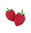 sweet small raspberry with fruit-stalk poster vector image
