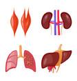 isolated object anatomy and organ logo set
