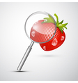 Magnifying Glass and Strawberry Isolated on Grey vector image