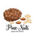 pine nuts in cartoon style vector image vector image