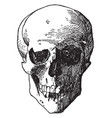 skull head was a design found on the shield of vector image vector image