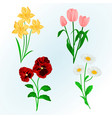 spring flowers daffodils pansies tulips vector image