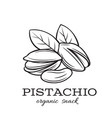 hand drawn pistachio nuts vector image