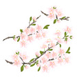 sakura cherry twigs pink flower with leaves vector image vector image