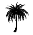 Silhouette of palm vector image